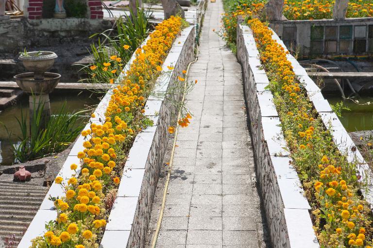 Vue partielle du jardin, allée fleurie d\'oeillets d\'Inde. (Jardin de ...